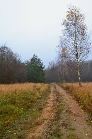 Birch trees in field. Rural dirt road in late autumn, vertical image