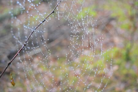 spider web with drops of water after rain in forest Stockfoto
