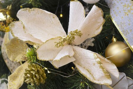 Christmas arrangement with pine twigs, white poinsettia flowers and golden silk ribbon on Christmas tree close up