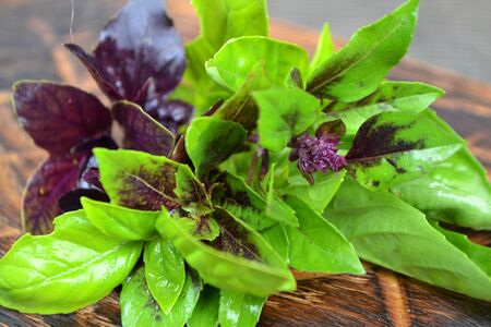 Assorted fresh herbs basil in green and purple colors in a rustic wooden table, closeup, cooking or alternative medicine, basil in the foreground