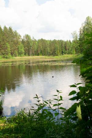 Forest lake under blue cloudy sky, landscape in Belarus