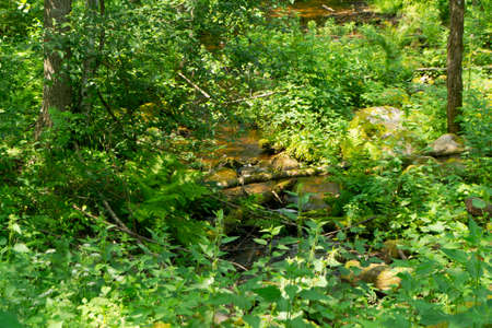 Beautiful view of stream in forest of Belarus