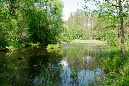 Scenic view of the forest lake in Belarus Archivio Fotografico
