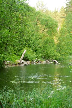 beautiful lake in deep forest in Belarus