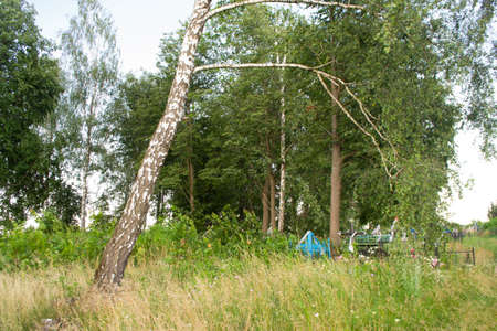 Old cemetery in Belarus. Birch trunk and cross on the grave. Summer