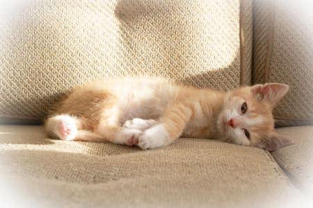 Cute little red kitten lying on sofa, conceptual image Stockfoto