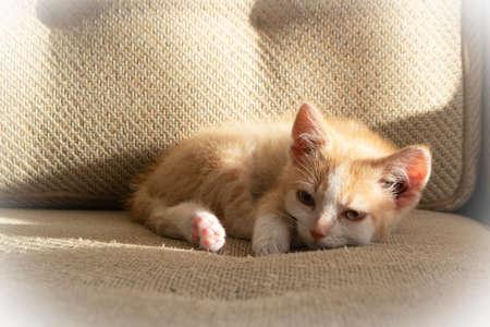 Kitten sleeping on the sofa, cat at home