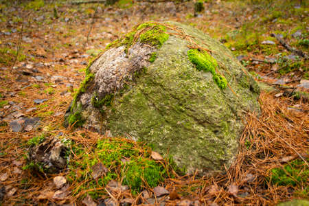 Big stone with moss in foggy autumn forest in Belarus