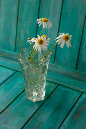 Bouquet of field daisies or camomile in a vase on turquoise background