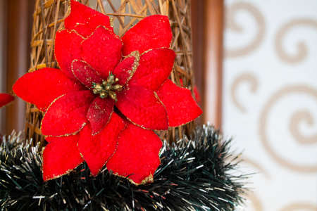 Red poinsettia decoration close up. Christmas flower card concept