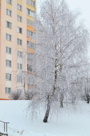 View through snowy trees on a winter city, vertical image