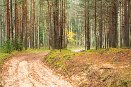 Magic autumn wild forest road in Belarus. Stockfoto
