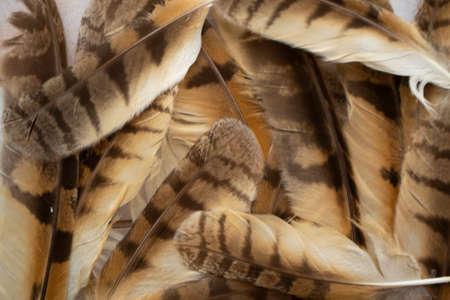 Long eared owl bird Asio otus feathers texture