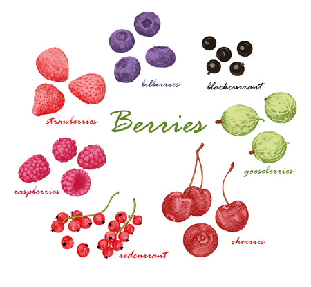 foreshortening: Set of colored hand draw graphic berries. Collection of hand-drawn colored graphic berries. Strawberries, raspberries, gooseberries, cherries, bilberries, red and black currant. Retro style. Vector illustration. Illustration
