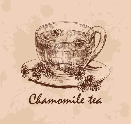 chamomile tea: Chamomile tea. Cup of herbal tea and chamomile flowers on saucer. Hand drawn graphic illustration. Vector