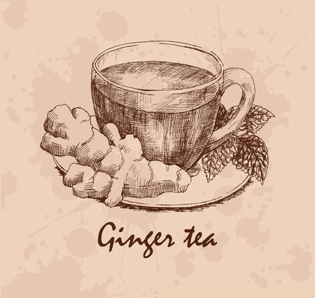 a sprig: Ginger tea. Cup with tea, ginger rhizome and sprig of mint on saucer. Hand drawn graphic illustration. Vector