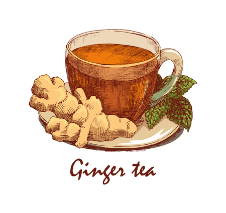 Colored hand drawn cup of ginger tea. Cup with tea, ginger rhizome and sprig of mint on saucer. Hand drawn graphic illustration isolated on white background. Vector