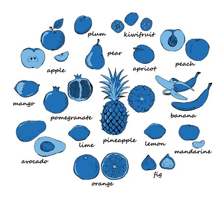 mandarins: Set of fruit doodles on blue colors. Set of doodle fruit isolated on white background. Vector illustration Illustration