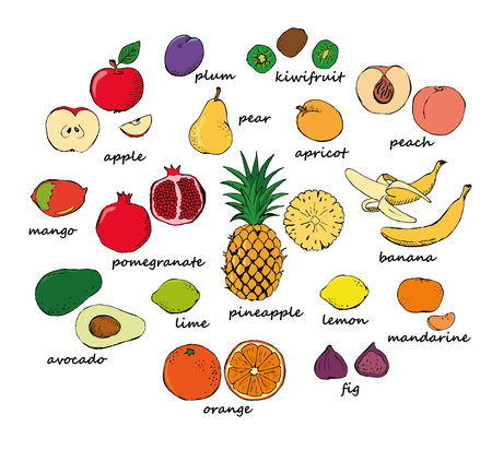 Set of color fruit doodles. Set of colored doodle fruit isolated on white background. Vector illustration
