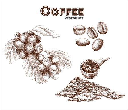 measuring spoon: Coffea, coffee beans and ground coffee. Hand drawn collection in vintage style. Vector illustration Illustration