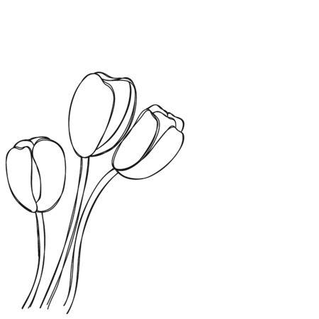 tulip flower hand drawn background vector