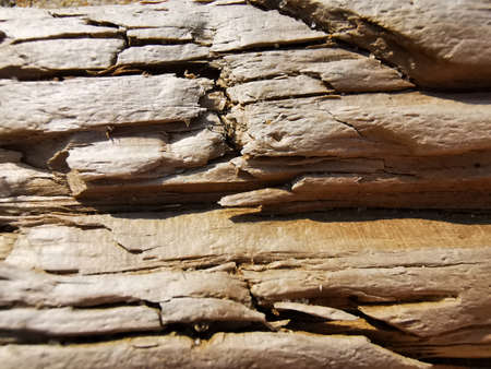 A piece of wood, a piece of wood that had been in sea water for a long time with cracks, creases. Textured wooden surface close up.