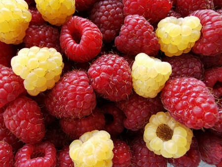 Red and yellow raspberries. Photo of fresh berries close-up. Reklamní fotografie