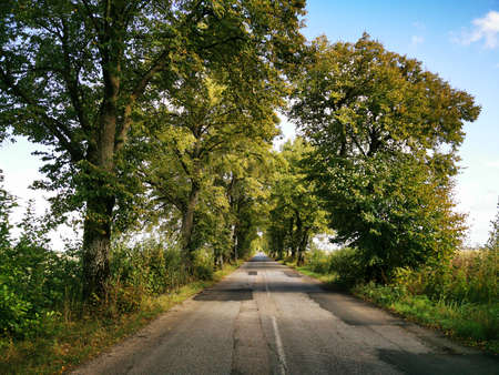 Old Prussian, German road with trees planted on the roadside Stock Photo