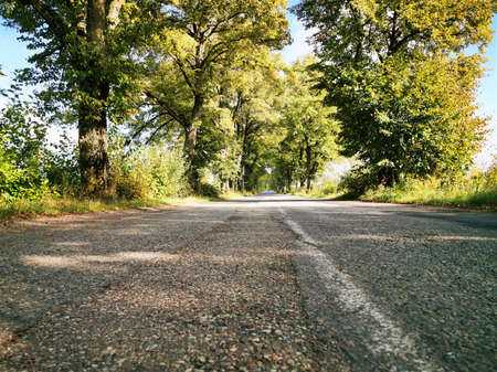 Old Prussian, German road with trees planted on the roadside Reklamní fotografie