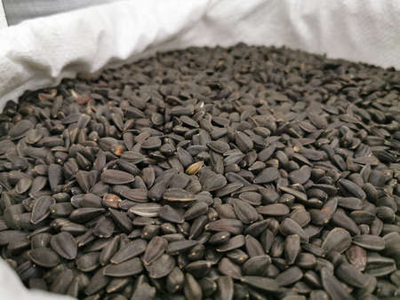 Sunflower seeds in the husk. Black roasted grains in a bag. Close-up photo Stock Photo