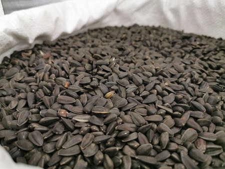 Sunflower seeds in the husk. Black roasted grains in a bag. Close-up photo Reklamní fotografie