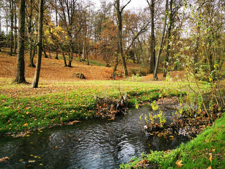 Autumn forest, great design for any purposes. Fall forest, river landscape. Nature background. Fall foliage. Autumn park with beautiful small stream, lawns with yellow leaves, large trees. Autumn day