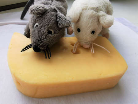 Cute, funny White and gray mouse with a piece of cheese. Close-up photo of the animal-symbol of 2020 year 스톡 콘텐츠