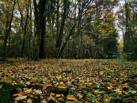 Beautiful picture with yellow, red and orange leaves. Autumn forest background. Fall day. Landscape photography. Autumn natural background. Fall forest. Growth concept. Beautiful colorful foliage