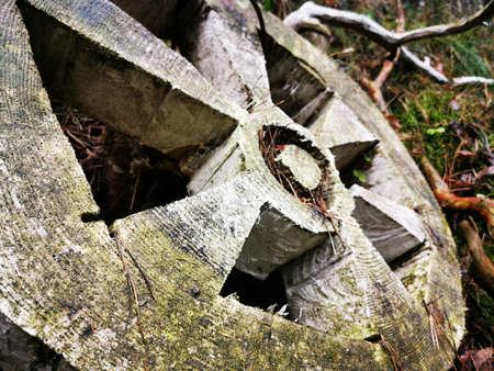 Beautiful closeup of wooden wheel for concept design. Landscape design on the Curonian spit in the forest. Travel transportation concept. Rural landscape. Standard-Bild - 136448274
