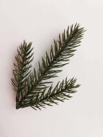 Beautiful neat twig of spruce on a white background. Close-up photo. Top view. Pattern with spruce branch. Fir-tree new year branch. Greeting card design celebration. Winter background Standard-Bild - 140229676