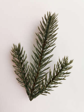 Beautiful neat twig of spruce on a white background. Close-up photo. Top view. Pattern with spruce branch. Fir-tree new year branch. Greeting card design celebration. Winter background Standard-Bild - 140229745