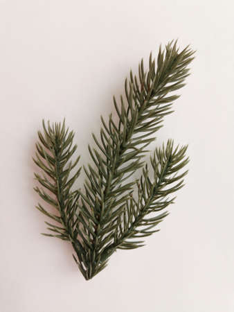 Beautiful neat twig of spruce on a white background. Close-up photo. Top view. Pattern with spruce branch. Fir-tree new year branch. Greeting card design celebration. Winter background Standard-Bild - 140534532