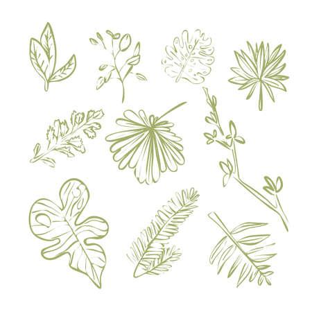 Green plants different leaves linear contour set
