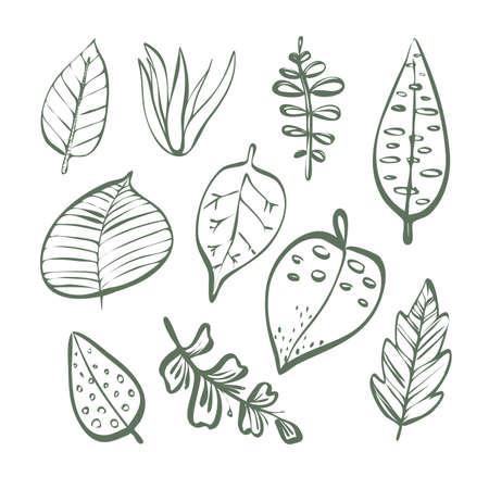 Set of different plant leaves linear outline Ilustração