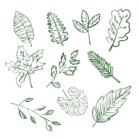 Plants green leaves linear contour set of ten