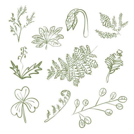 Leaves of green plants linear contour set Ilustração