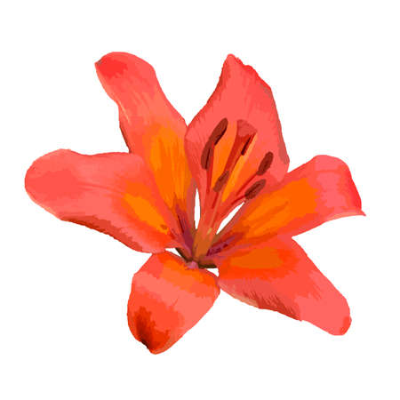 Orange Lily is a beautiful flower in the garden Ilustrace