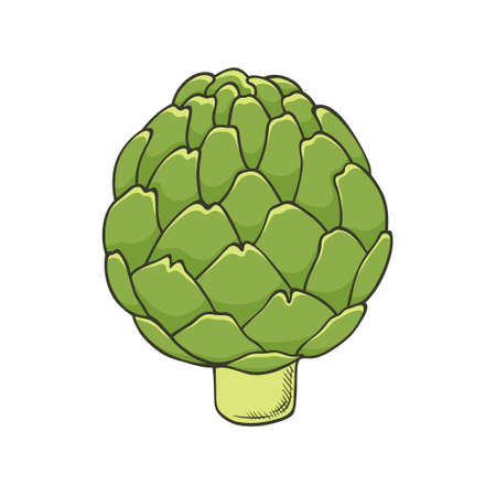 Hand drawn icon of green fresh artichoke - template for posters, brochures, banners, restaurant menu design and market. Healthy food and vegetarian