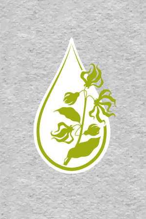 A drop of ylang ylang flower essential oil . Branches of cananga tree. Aromatherapy, perfumery, cosmetics, spa . raft paper textured