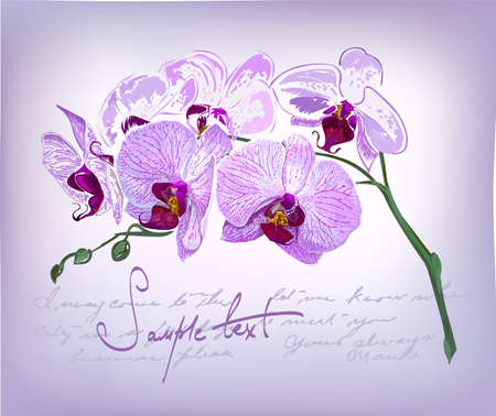 Beautiful orchid flowers hand-drawing Stock Vector - 16573005