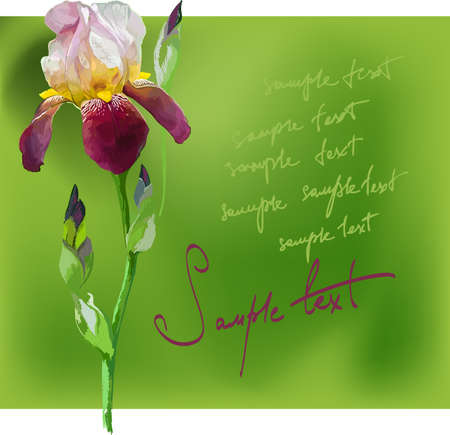 iris flower: Beautiful flower iris on a green background hand-drawing Illustration