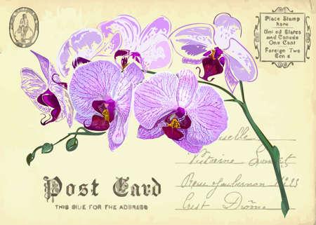 postal vintage: postal de la vendimia con un dibujo a mano flor de la orqu�dea Vectores