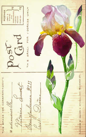 Vintage postcard with a flower iris hand drawing