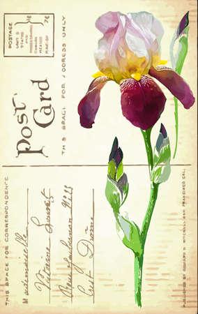 postcard: Vintage postcard with a flower iris hand drawing Illustration